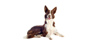 Breeds of dogs in Hindi